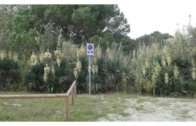 Foto 8 - Loft/Open Space in Vendita da Privato - Comacchio, Frazione Lido Di Volano