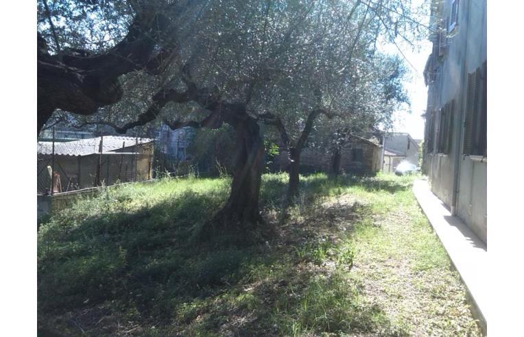 Piante Di Ulivo In Vendita : Privato vende rustico casale con terreno e piante