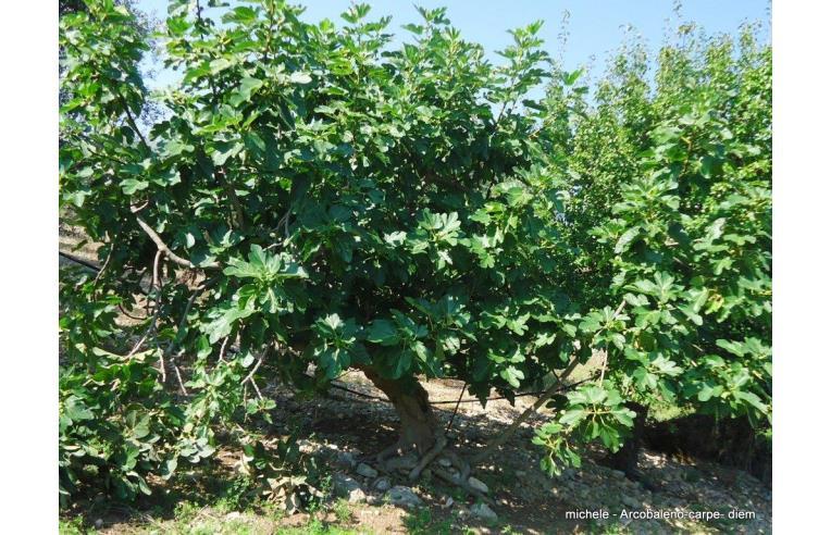 Privato vende terreno agricolo coltura terreno agricolo for Alberi frutta vendita