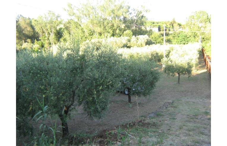 Piante Di Ulivo In Vendita : Privato vende terreno agricolo coltura